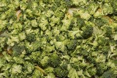 Fresh raw broccoli Stock Image