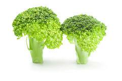 Fresh raw broccoli on a white background. Clipping path. Fresh head of broccoli isolated on a white background cutout Stock Images