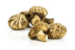 Fresh raw shiitake mushroom isolated on white royalty free stock image