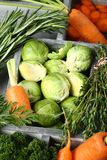 Fresh raw brussels sprouts, carrots, rosemary, thyme and parsley in wooden box Stock Images