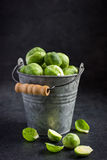 Fresh raw brussels sprouts in pail. Fresh raw brussels sprouts in small pail Stock Photography