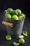 Fresh raw brussels sprouts in pail. Fresh raw brussels sprouts in small pail Royalty Free Stock Images
