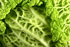 Fresh Raw Cabbage. Closeup Photography ( Macro Photo ) Green Cabbage Royalty Free Stock Photos