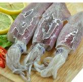 Fresh raw calamari Royalty Free Stock Image