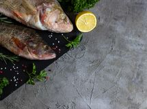 Fresh raw carp fish. Ice cubes, lemon and lime slices, spices and herbs on a black stone boards on black marble background. top view, copy space Royalty Free Stock Photos