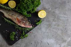 Fresh raw carp fish. Ice cubes, lemon and lime slices, spices and herbs on a black stone boards on black marble background. top view, copy space Royalty Free Stock Photography