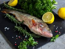 Fresh raw carp fish. Ice cubes, lemon and lime slices, spices and herbs on a black stone boards on black marble background. top view, copy space Royalty Free Stock Images