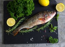 Fresh raw carp fish. Ice cubes, lemon and lime slices, spices and herbs on a black stone boards on black marble background. top view, copy space Royalty Free Stock Photo