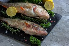 Fresh raw carp fish. Ice cubes, lemon and lime slices, spices and herbs on a black stone boards on black marble background. top view, copy space Stock Photography