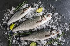 Fresh raw carp fishes with spices, lemon, rosemary on ice over dark stone background. Creative layout made of fish, top view. Flat lay royalty free stock photography