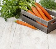 Fresh raw carrots with leaves. In a box on a white wooden table Royalty Free Stock Photography