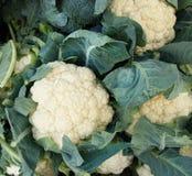 Fresh raw cauliflower. Ona farmers marker Stock Photo