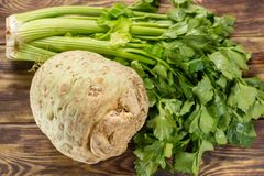 Fresh raw celeriac root head and celery green crisp petiole, ing. Fresh raw celeriac head and celery green crisp petiole, ingredient for many healthy dishes Stock Image
