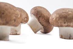 Fresh raw champignons Stock Images