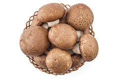 Fresh raw champignons Stock Image