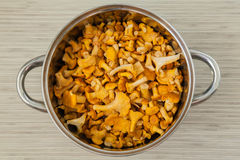 Fresh raw chantarelles in a pot. Upper view of fresh raw chantarelles in a pot Royalty Free Stock Photo