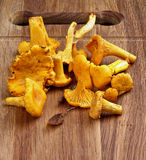 Fresh Raw Chanterelles. Heap of Fresh Raw Chanterelles Mushrooms closeup on Wooden Cutting Board Royalty Free Stock Photo