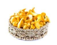 Fresh, raw chanterelles mushrooms  in basket, great harvest. Fresh, raw chanterelles in basket, great autumn  harvest Stock Photos