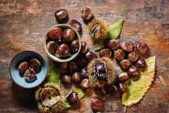 Fresh raw chestnuts. Fruits in autumn season Royalty Free Stock Photography