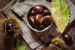 Fresh raw chestnuts. Fruits in autumn season Royalty Free Stock Photos