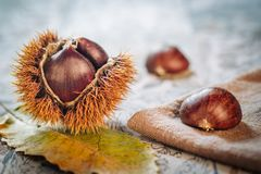 Fresh raw chestnuts. Fruits in autumn season Royalty Free Stock Image
