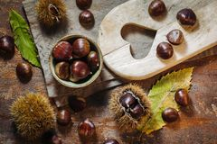 Fresh raw chestnuts. Fruits in autumn season Stock Images