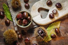 Fresh raw chestnuts. Fruits in autumn season Stock Photography