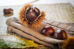 Fresh raw chestnuts. Fruits in autumn season Stock Image