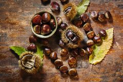 Fresh raw chestnuts Royalty Free Stock Photography