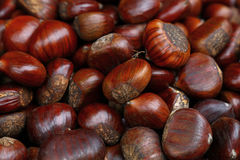Fresh raw chestnuts marrons close up Royalty Free Stock Images