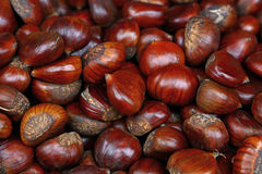 Fresh raw chestnuts marrons close up Stock Photos