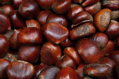 Fresh raw chestnuts marrons close up. Fresh raw sweet tree chestnuts marrons close up, high angle view Royalty Free Stock Photography