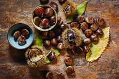 Fresh raw chestnuts. Ts in autumn season Royalty Free Stock Image