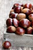 Fresh  raw chestnuts  in a wooden box on wooden background. Fresh  raw chestnuts in a wooden box on wooden background Royalty Free Stock Image