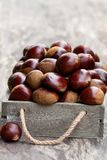 Fresh  raw chestnuts  in a wooden box on wooden background Royalty Free Stock Image