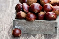 Fresh  raw chestnuts in a  wooden box on wooden background. Fresh  raw chestnuts in a wooden box on wooden background Stock Images