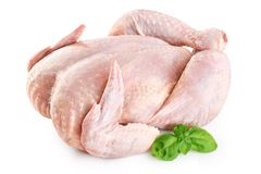 Fresh raw chicken and basil. Isolated on white background Stock Photo