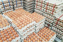 Fresh raw chicken eggs in package for sale. In supermarket Royalty Free Stock Image