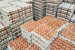 Fresh raw chicken eggs in package for sale. In supermarket Royalty Free Stock Photo