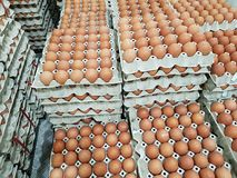Fresh raw chicken eggs in package for sale. In supermarket Stock Photos