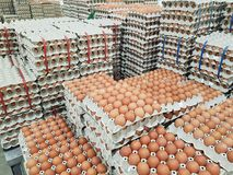 Fresh raw chicken eggs in package for sale. In supermarket Royalty Free Stock Photography