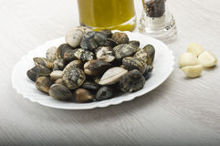 Fresh raw Clam Royalty Free Stock Photos