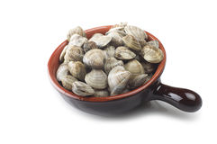 Fresh raw Clam Royalty Free Stock Photo