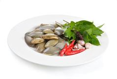 Fresh raw  clam on a white background. Fresh raw  clam  ready to cook on a white plate Stock Images