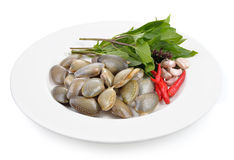 Fresh raw  clam   on a white plate. Fresh raw  clam  ready to cook on a white plate Royalty Free Stock Photos