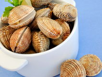 Fresh raw clams. /cockles stacked in a white porcelain dish on a blue background Royalty Free Stock Photos