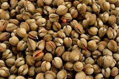 Fresh raw clams. A market at Malaysia, Asia Royalty Free Stock Photos