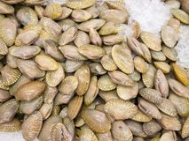 Fresh raw clams on ice. In the market Stock Photography