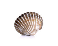 Fresh raw cockle on the white background.  Stock Photos