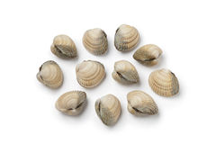 Fresh raw cockles. On white background Stock Image